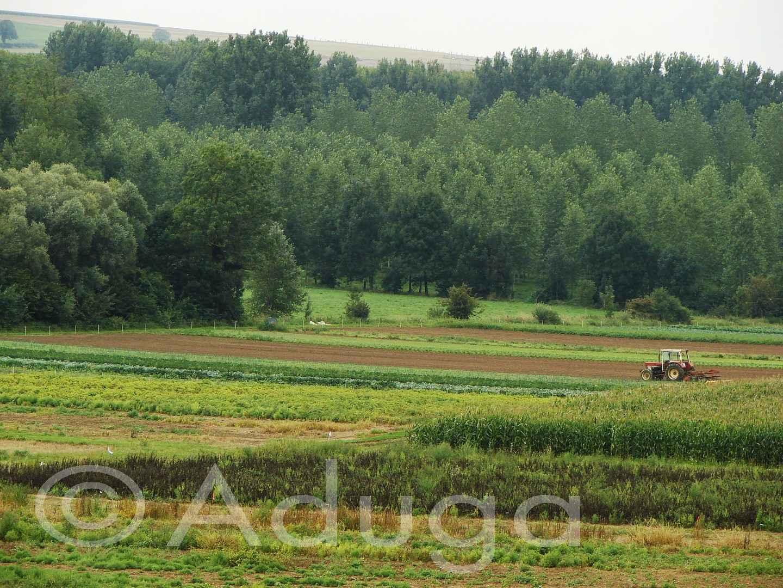 Photo de la semaine. Agriculture maraîchère. Cottenchy, CC Avre, Luce et Noye
