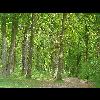 20_CCCC_20090506_Conty_Paysage_Bois - image/jpeg