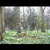 P1080682_Parc_Chateau_Rambures_20110327.JPG - image/jpeg