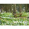 P1080683_Parc_Chateau_Rambures_20110327.JPG - image/jpeg