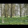 P1080689_Parc_Chateau_Rambures_20110327.JPG - image/jpeg