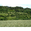 045_Boisbergue_Larris_20070620.jpg - image/jpeg