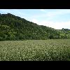 047_Boisbergue_Larris_20070620.jpg - image/jpeg