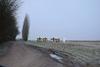 020_chemin_Poubelles - image/jpeg