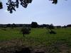 Le_Quesnot_Patures 2_1 - image/jpeg